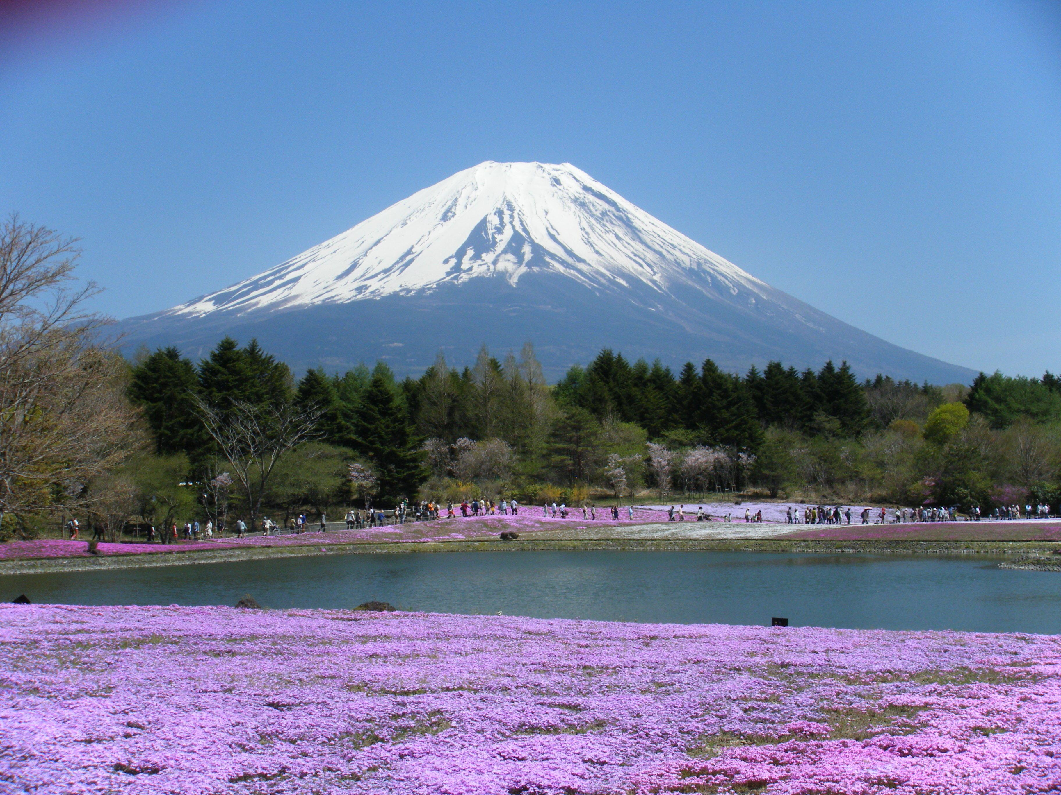 世界遺産富士山と芝桜_201704-06